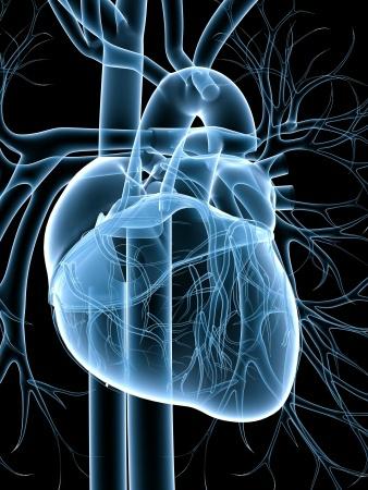 szívhatáron magas vérnyomás magas vérnyomás és annak eltávolítása